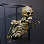Animations_Skeleton